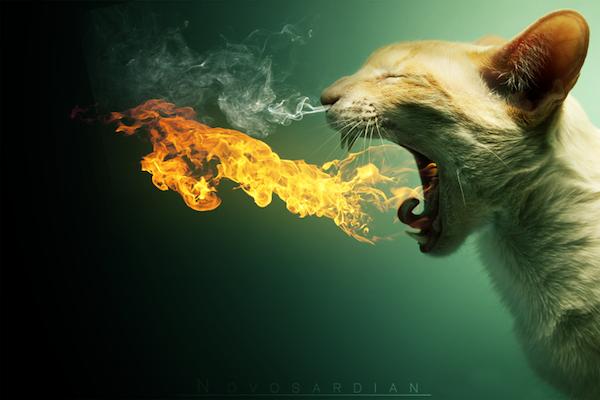 cat-dragon-600x.png