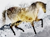 Icehorse