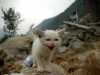 kitten_earthquake