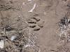 bill-lynn-wolf-track-ynp-2003